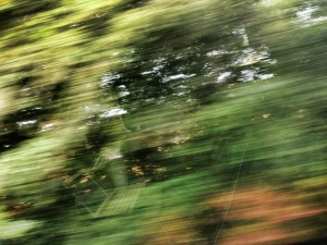 Trees at speed