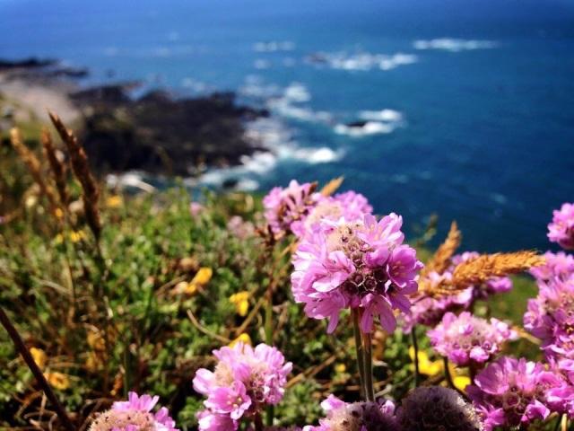 Flowers on Jersey
